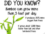 Bamboo - The Amazing Miracle Plant