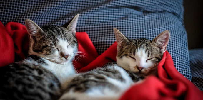 10 Life Lessons My Rescue Cats Taught Me During COVID