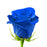 Blue Tinted Rose I From $2.50 / Stem  FREE SHIPPINGI Ecuadorian Rose
