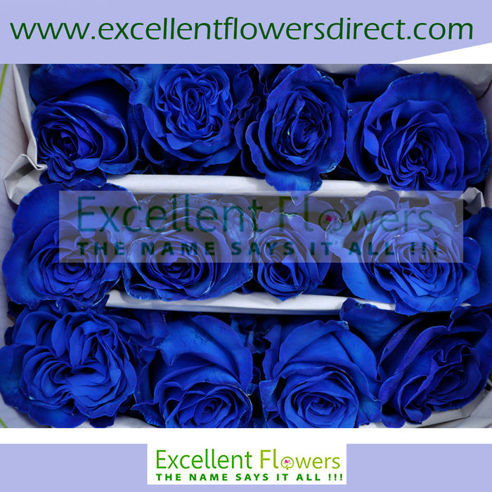 Blue Tinted Rose I From $2.14 / Stem  FREE SHIPPINGI Ecuadorian Rose