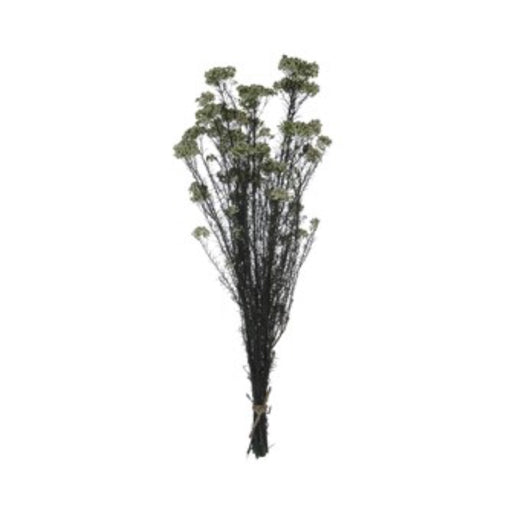 Dried Natural Sago Bush Bunch - Greenhouse Home