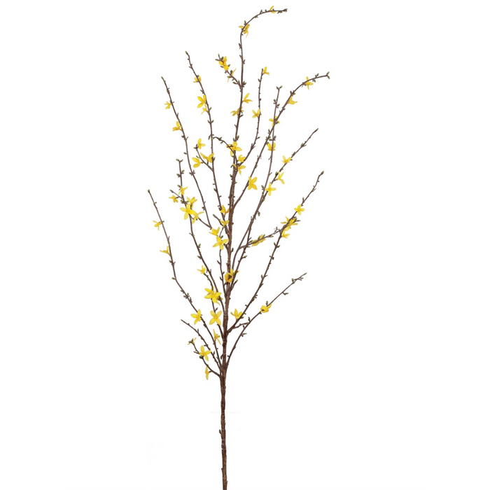 Forsythia Stem - Greenhouse Home