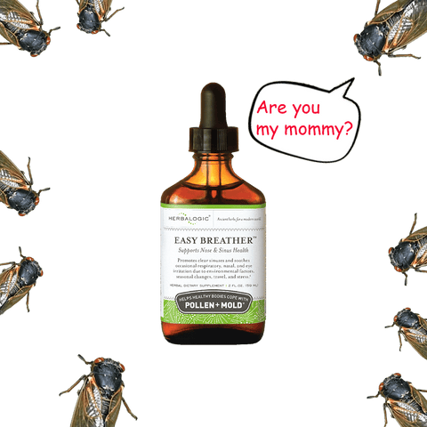 """Cicadas moving toward Herbalogic Easy Breather Herb Drops with a cartoon bubble """"Are you my mommy?"""""""