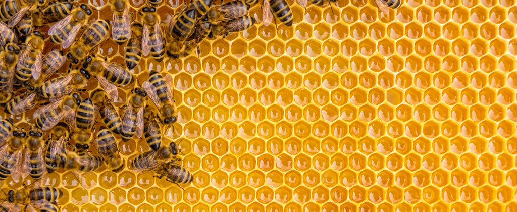 Herbalogic Reviews for Good Program Save 147,500 Honey Bees
