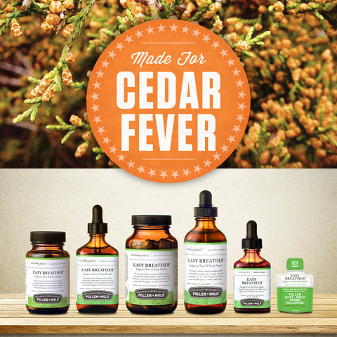 Cedar fever begins with the pollen-packed buds of the mountain cedar (ashe juniper) tree, which release prodigious amounts of pollen grains during cedar fever season. Easy Breather is a natural cedar fever remedy available in liquid herb tinctures and herbal capsules.