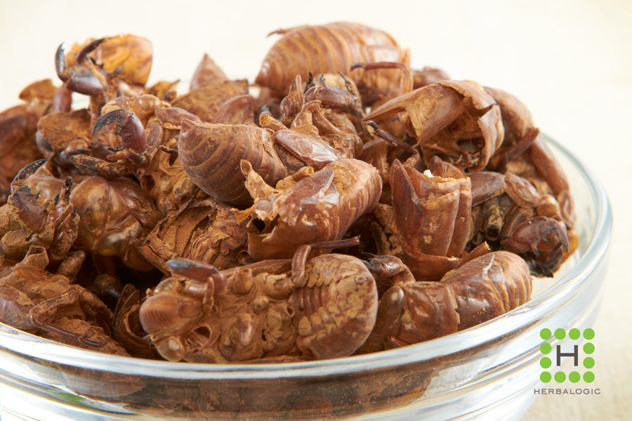 Herbs for Allergy Support: Cicada Molting as an Ingredient in Easy Breather