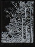 Negative Forest