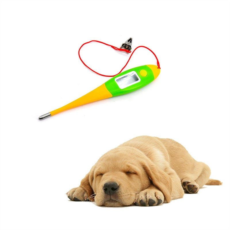 Digital Dog Thermometer