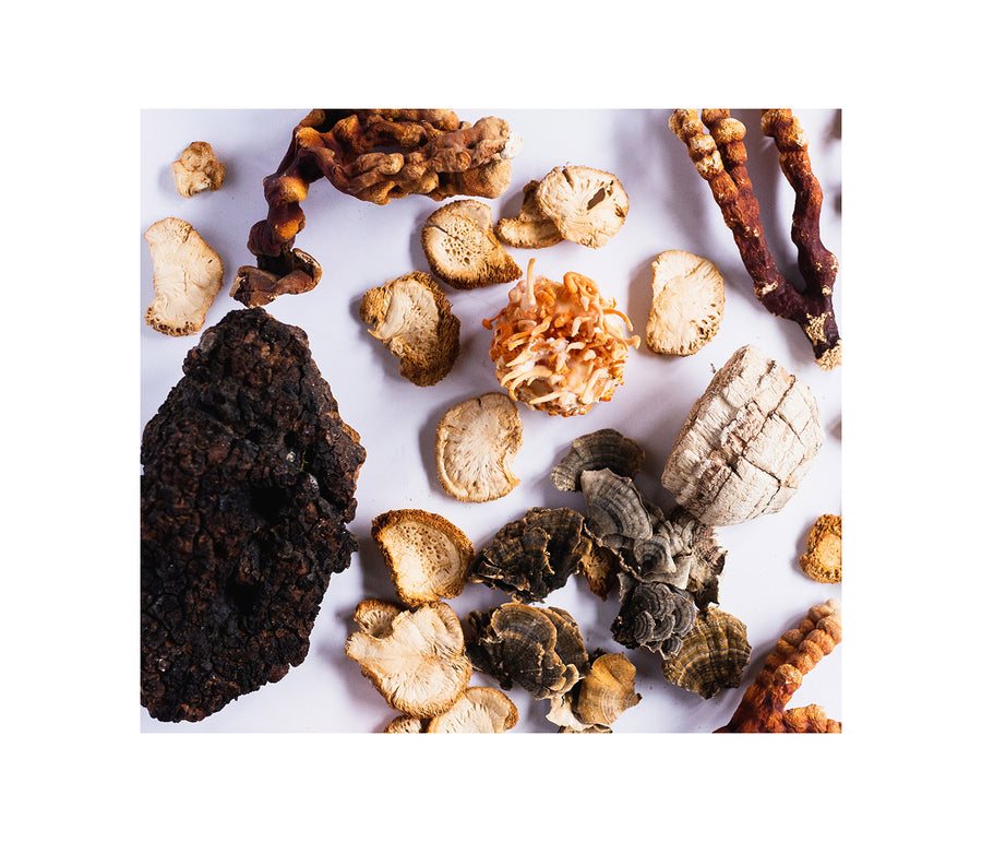 Stay Wyld Organics Daily Immunity Mushroom Blend Capsules-Corcyceps-Chaga-Lion's Mane-Reishi-Turkey Tail - North American Grown Medicinal Mushrooms - Organic Mushrooms, 100% Plastic Free packaging, steamed for maximum bioavailability. Multi-Faceted Immune System Boost Antioxidant-Rich Superfood Cellular Protection Inflammation Control Energy Balancer Brain Health and Cognitive Enhancement Overall Health Promotion