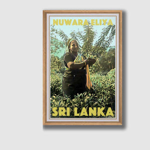 Framned Poster Nuwara Eliya Tea Plantation Plucker - Original Edition Tea Plucker Sri Lanka