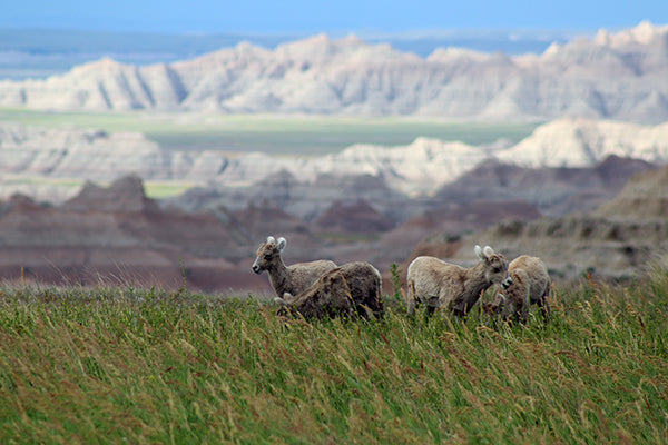 Discover Free Camping Inside Badlands National Park