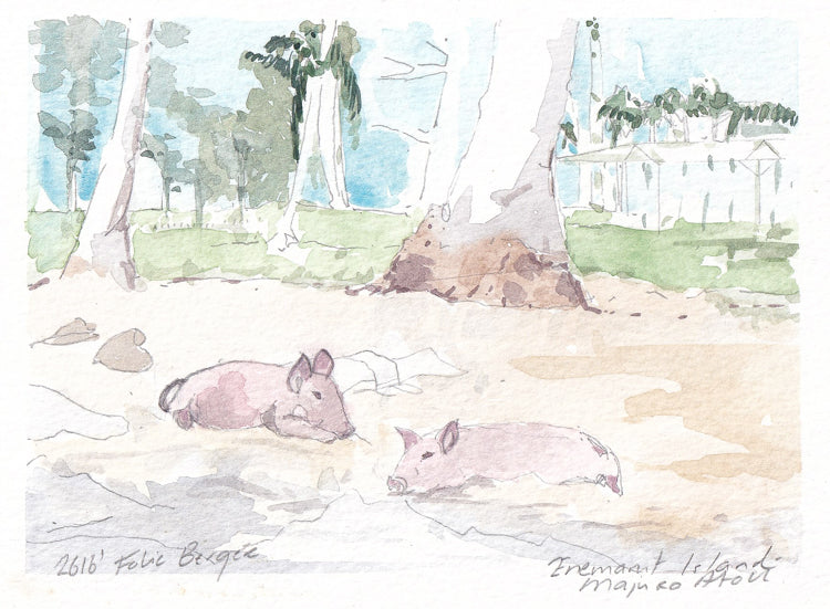 Pigs on Enemanit Island Majuro Atoll