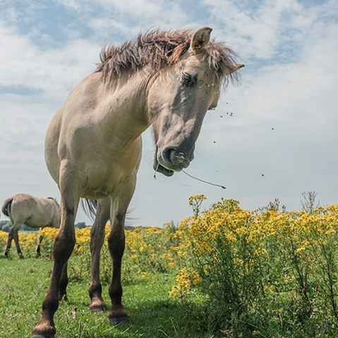Fly and Mosquito prevention for horses and farm animals