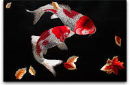 Our Two Koi Fish Silk Embroidery which uses 1/4 Silk Thread