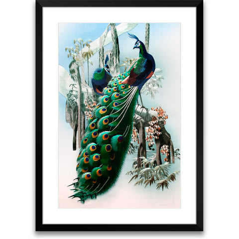 Two Peacocks-1