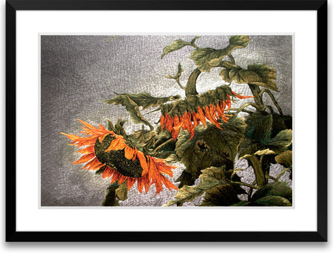 Wilted Sunflowers-1