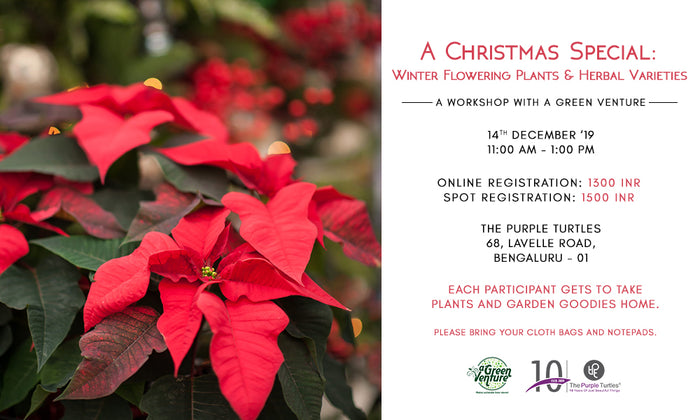 A Christmas Special: Winter Flowering Plants & Herbal Varieties Workshop