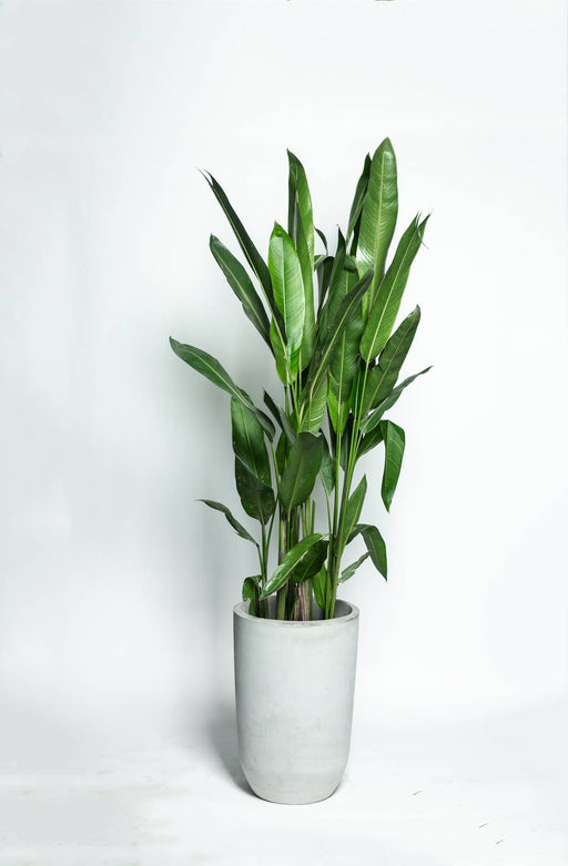 Conico Planter