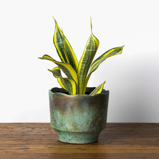 Verdi Planter (Green)