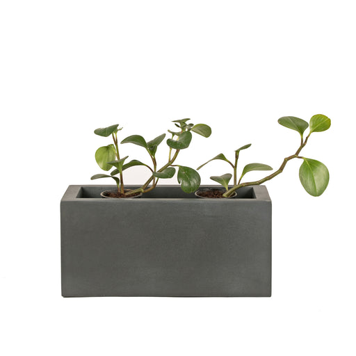Tendril Planter (horizontal)