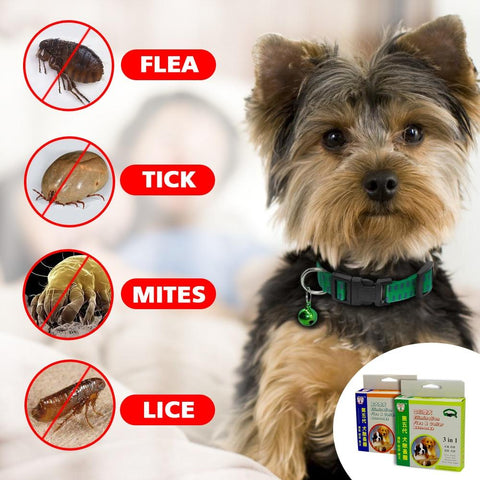Safety Dog & Cat Anti Flea Tick Collar