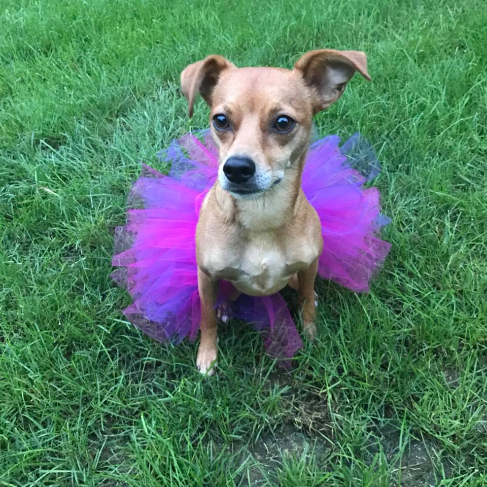 Pink and Purple Princess Tutu