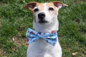 Blue agility equipment bow tie