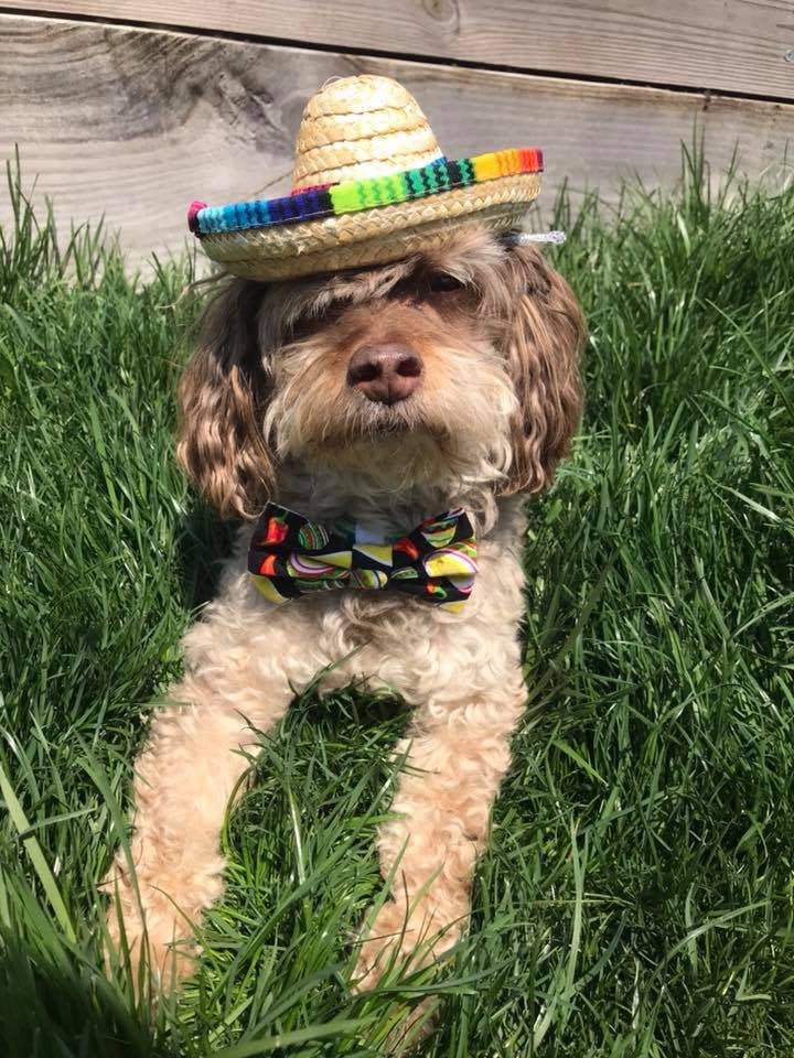 Sombrero  black with peppers bow tie