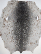 Load image into Gallery viewer, Ringed Seal Natural - Dressed Fur Skin - Fur - Stampe Denmark