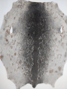 Ringed Seal (Ringsæl) Natural - Dressed Fur Skin - Fur | STAMPE PELS