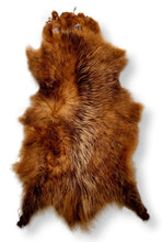 Load image into Gallery viewer, Opossum Brown - Dressed Fur Skin - Fur | STAMPE PELS