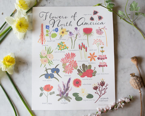 """Flowers of North America"" Print"