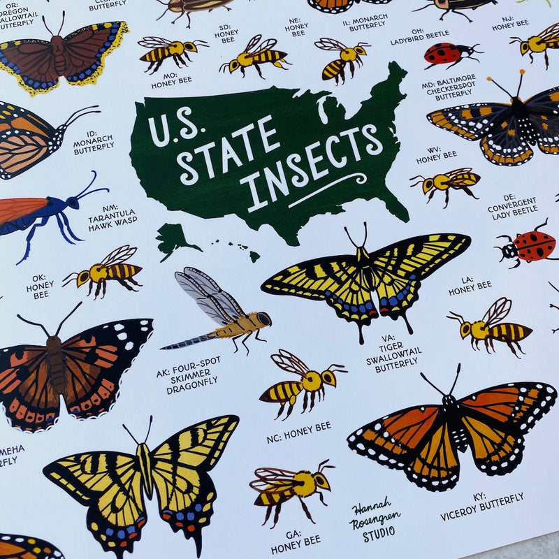 US State Insects - Print