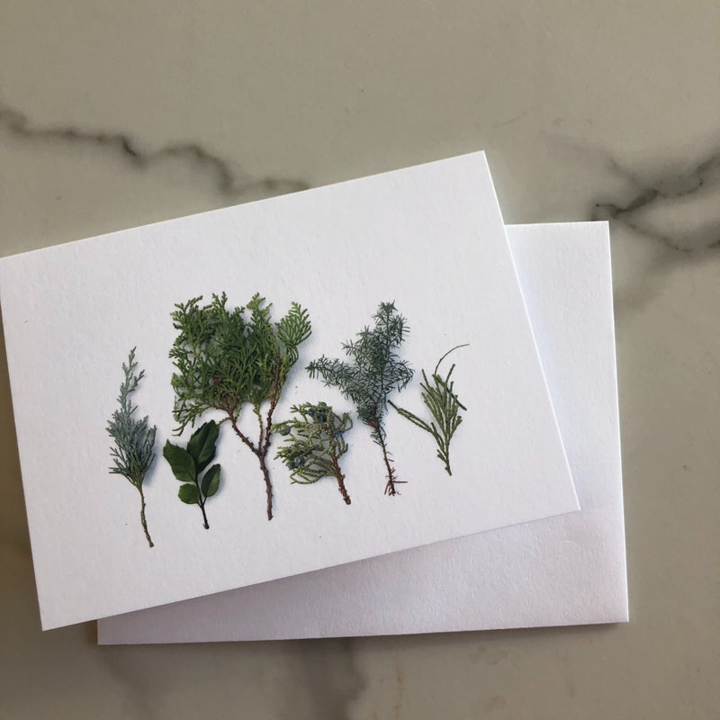 Baby Evergreens Note Card
