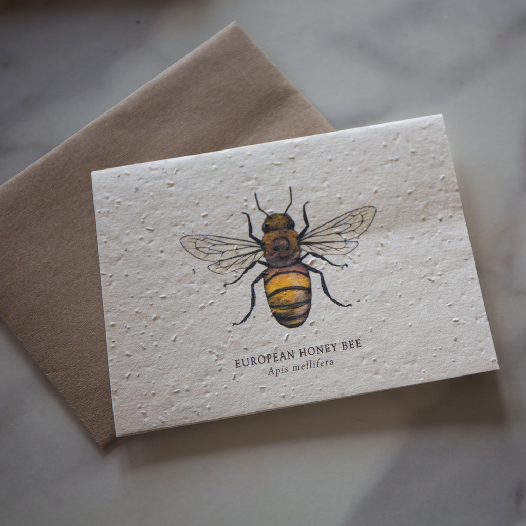 Greeting Cards - Plantable Seed Paper
