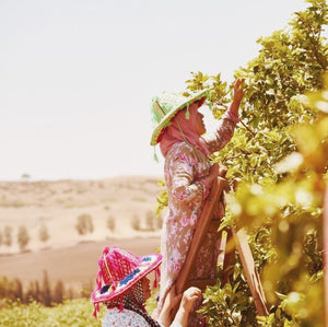 Moroccan women picking argan almonds