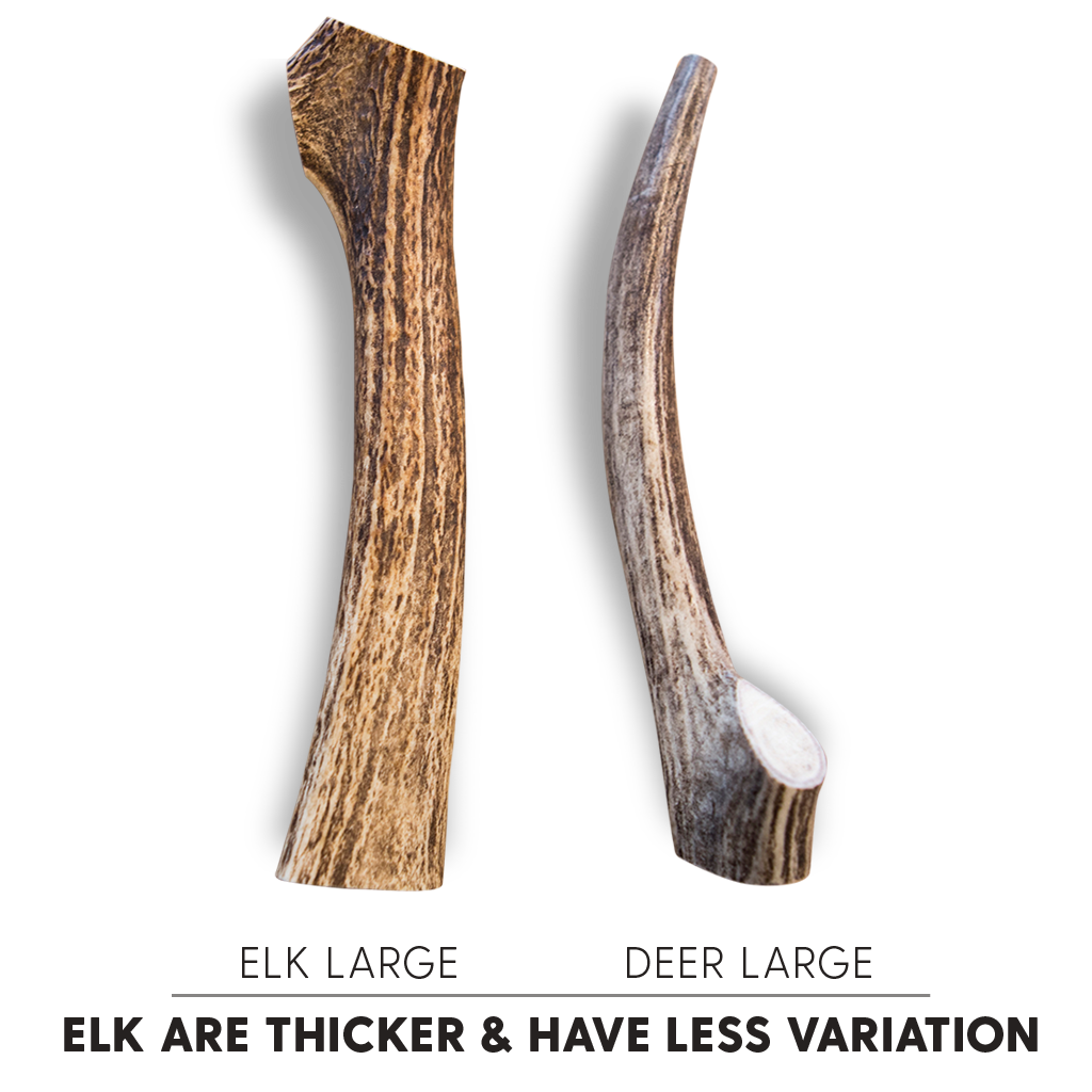 Antler Chew Elk - Medium