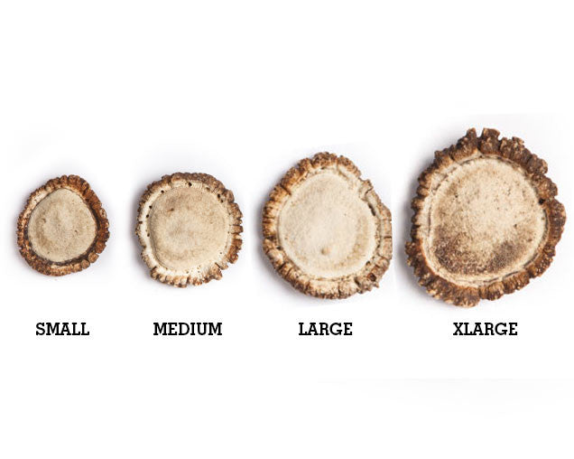 Antler Burr Comparison