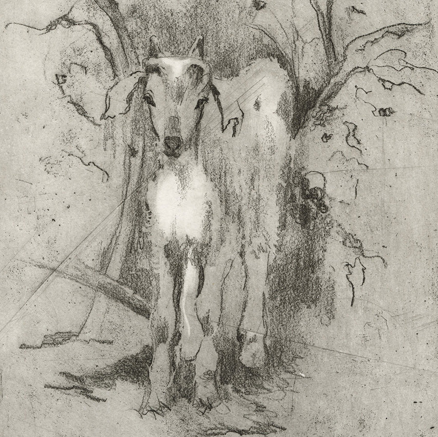 Anna Jeretic - Mountain Goat - Chevre Alpine - soft-ground etching - detail