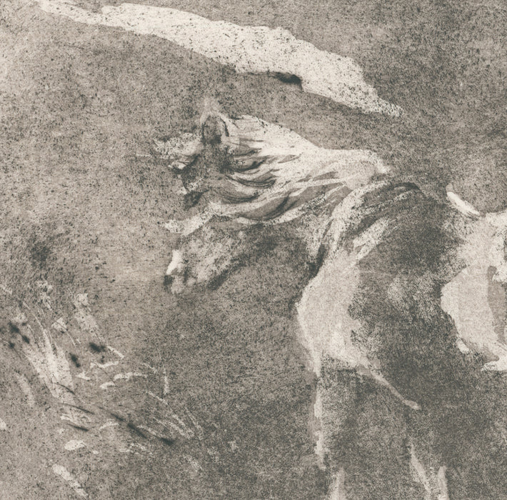 Anna Jeretic - Icelandic Pony - aquatint