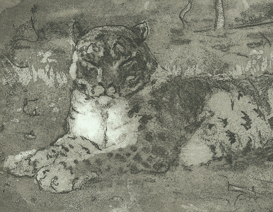 Anna Jeretic - Snow Leopard Resting - 2007 - etching aquatint