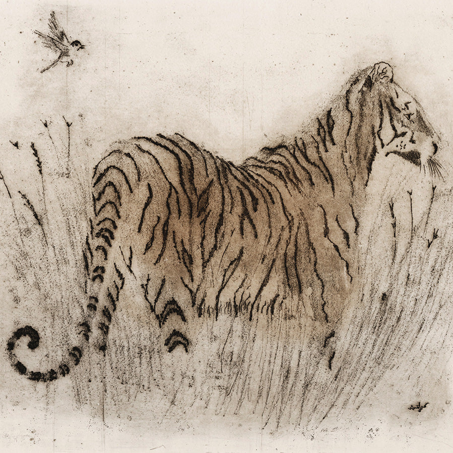 Anna Jeretic - Tigre du Bengal - soft-ground etching