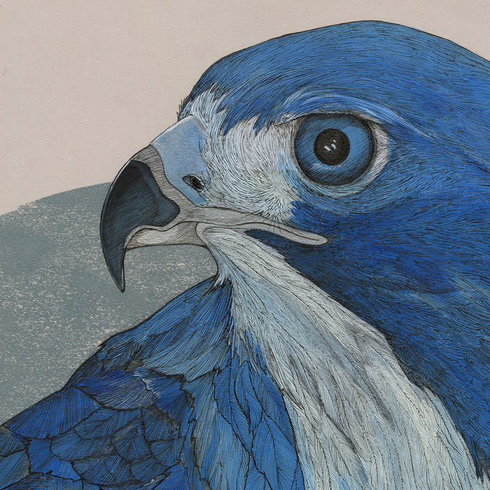 Chloe Alexander - The Hawk and the Linnet - detail