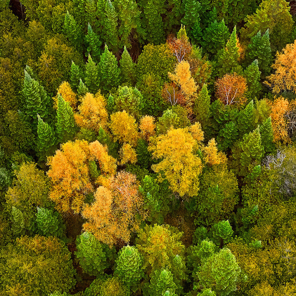 Daniel Anderson - A Smattering of Larches - Door County - Color Photography