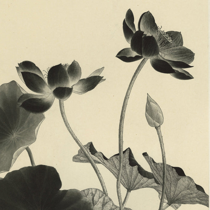 Etching and aquatint - by TAKEDA, Fumiko - titled: Lotus
