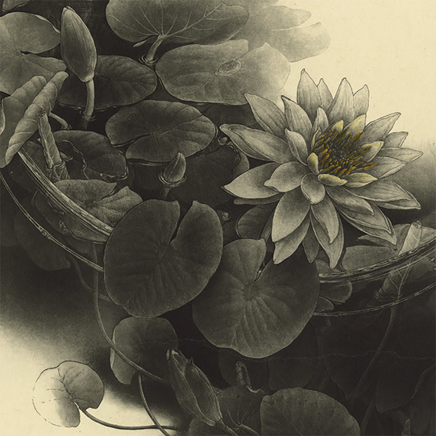 Fumiko Takeda - 武田 史子 - Water lily - ゆらぎ〜  - intaglio etching aquatint - detail