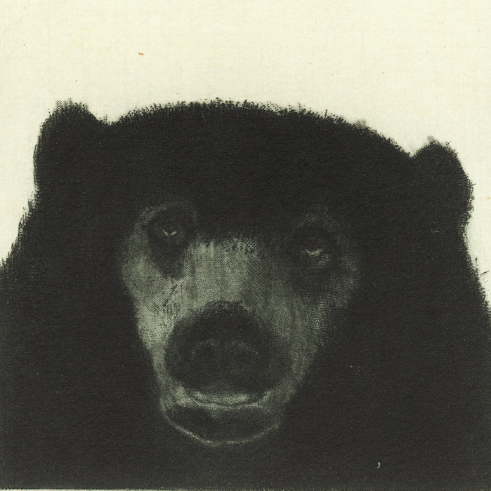 portrait of a bear by Fumiko Takeda - original etching roulette aquatint intaglio