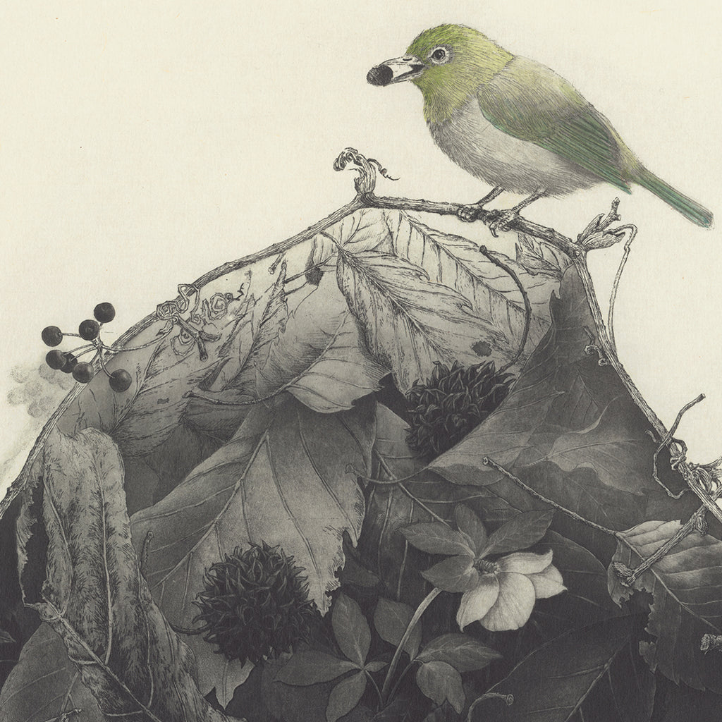 Fumiko Takeda - 武田 史子 - breath - 息吹 - intaglio etching aquatint - bird and flora