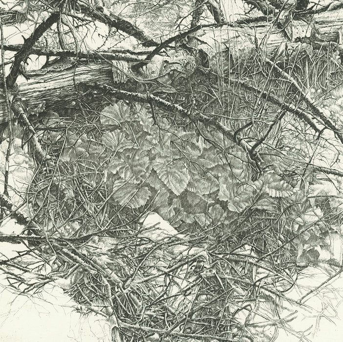 Livio Ceschin - Al tronco smunto dell'abete - Haggard Trunk of the Fir - scraggly branches - etching drypoint