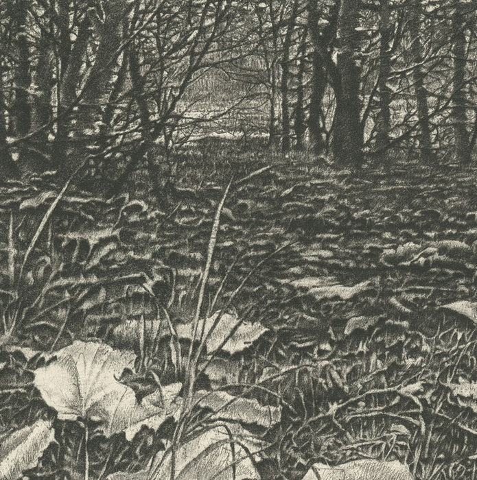 Livio Ceschin - Vegetazione - Vegetation - Sous Bois - grass leaves covered ground - branch forest